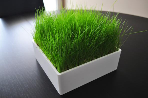 Carré de verdure - Pré Vert