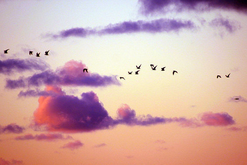 Birdy Sky