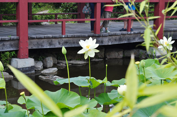 Jardin Japonais - Nantes