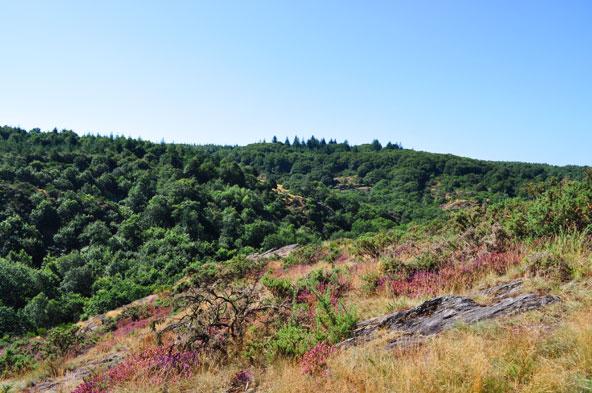 Val Sans Retour - Forêt de Brocéliande