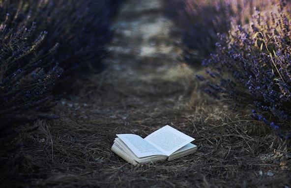 Lavender book