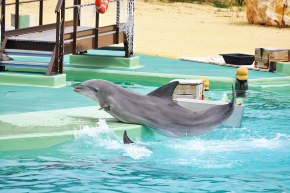 Planete sauvage rencontre dauphins