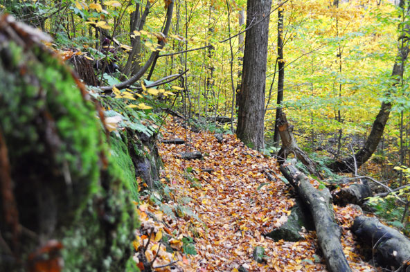 Forêt en automne - Québec