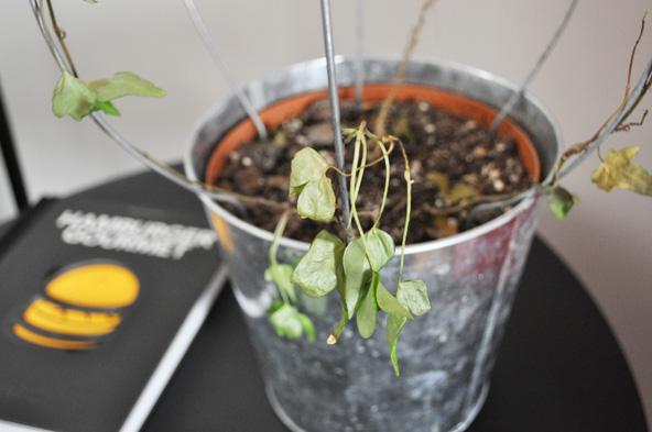 Plante pourrie