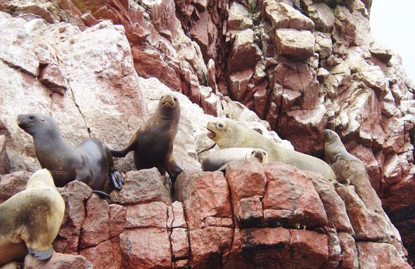 Islas Ballestas - Pérou