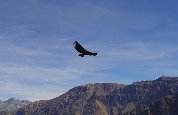 Cruz del condor (Pérou)