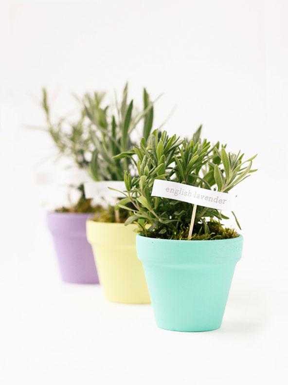 Pastel d'herbes aromatiques