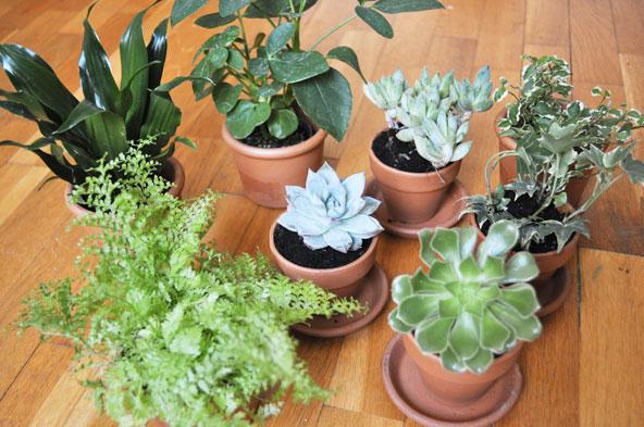 DIY - Tiroirs vintage en jardinière