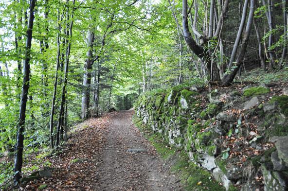 Balade en forêt - Yzeron