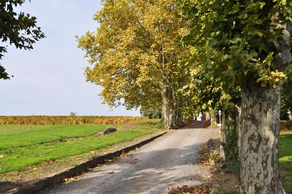 Château des Ravatys - vignes