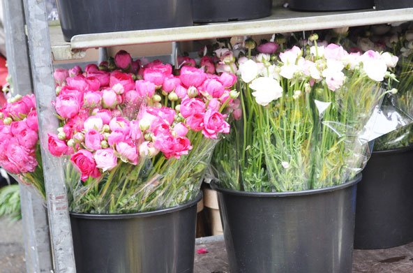 Columbia Road Flower Market - London