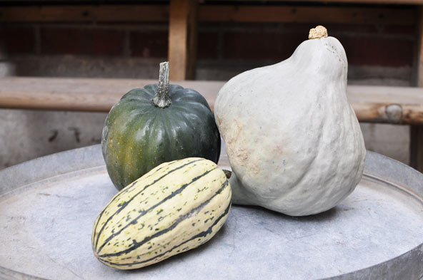 Courges au Verger Labonté