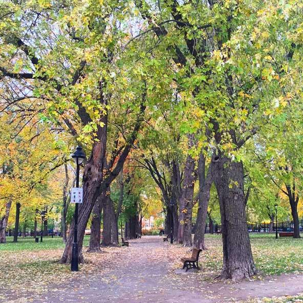 Parc Laurier en automne (Montréal)