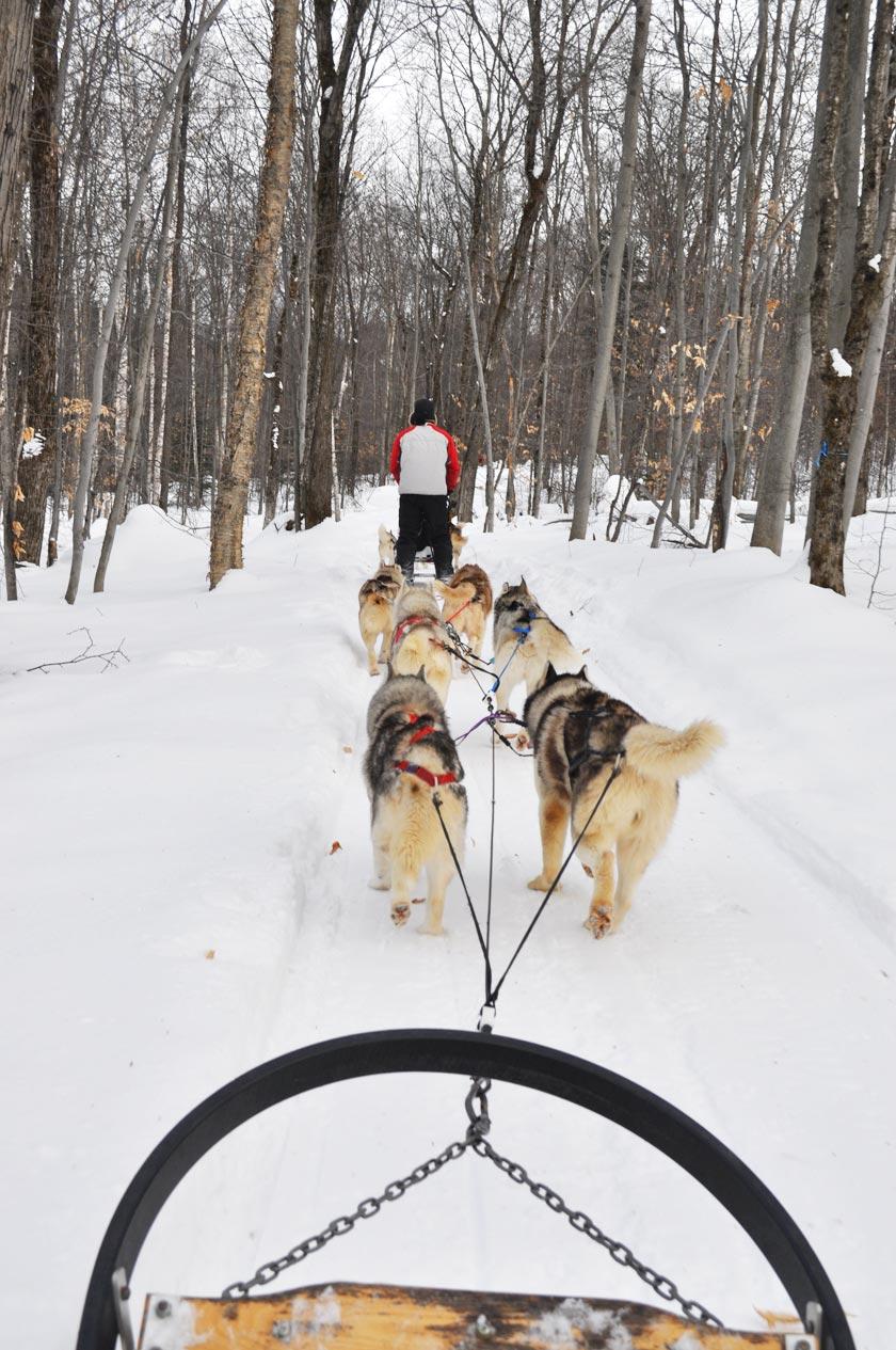 Chiens de traîneau - Québec