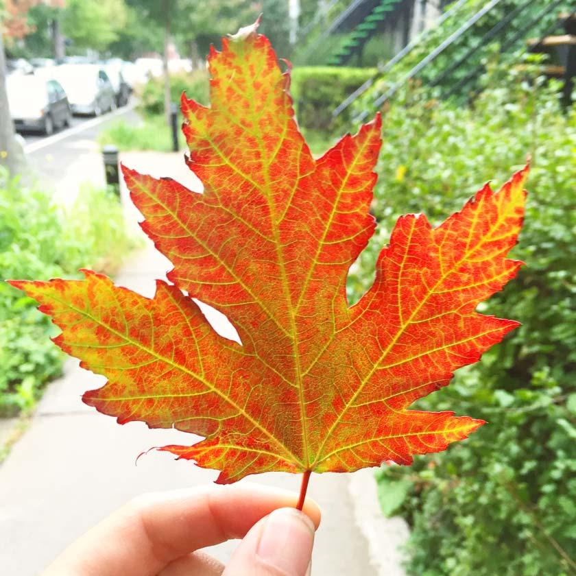 L'automne à Montréal