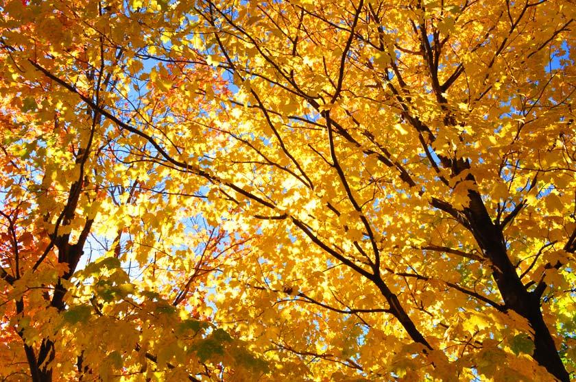 Le parc du Mont-Royal en automne