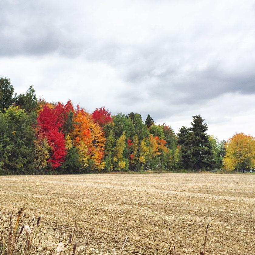 La campagne québécoise en automne