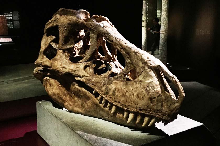 T-rex du Musée des Confluences