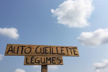 Autocueillette de légumes au Québec