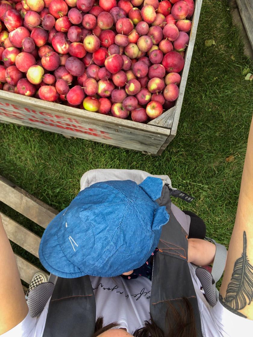 Cueillette de pommes biologiques au Québec